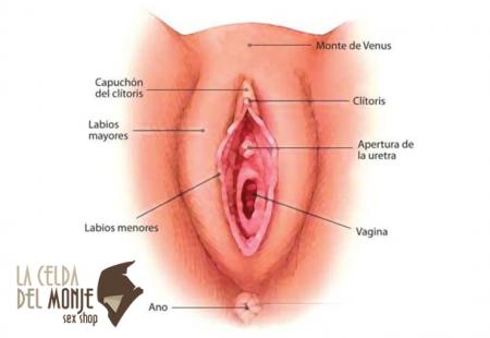 Estructura de la vagina